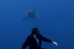 adam-kimmel-shark-864x576